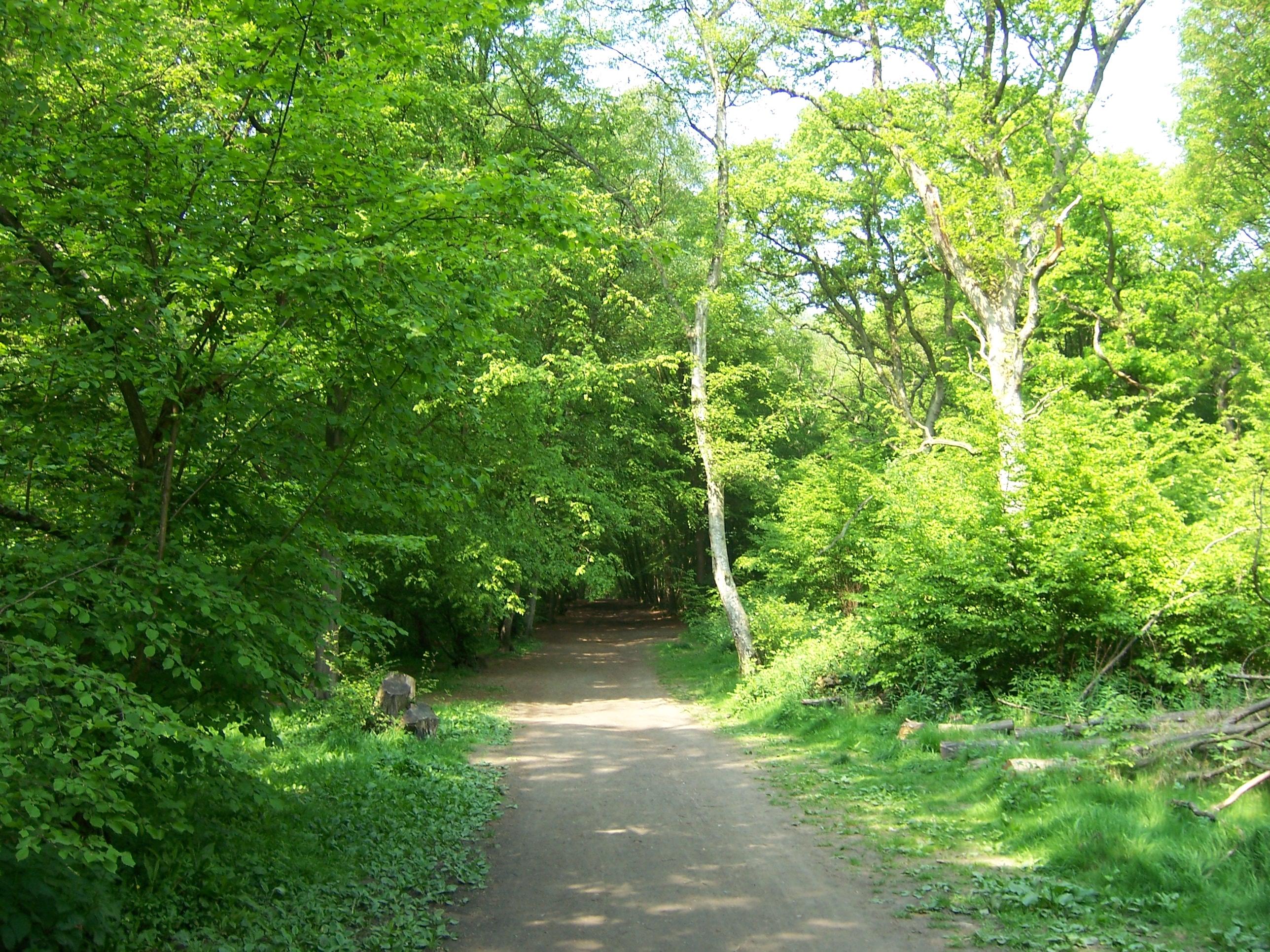 file pathway through park wood ruislip jpg wikimedia
