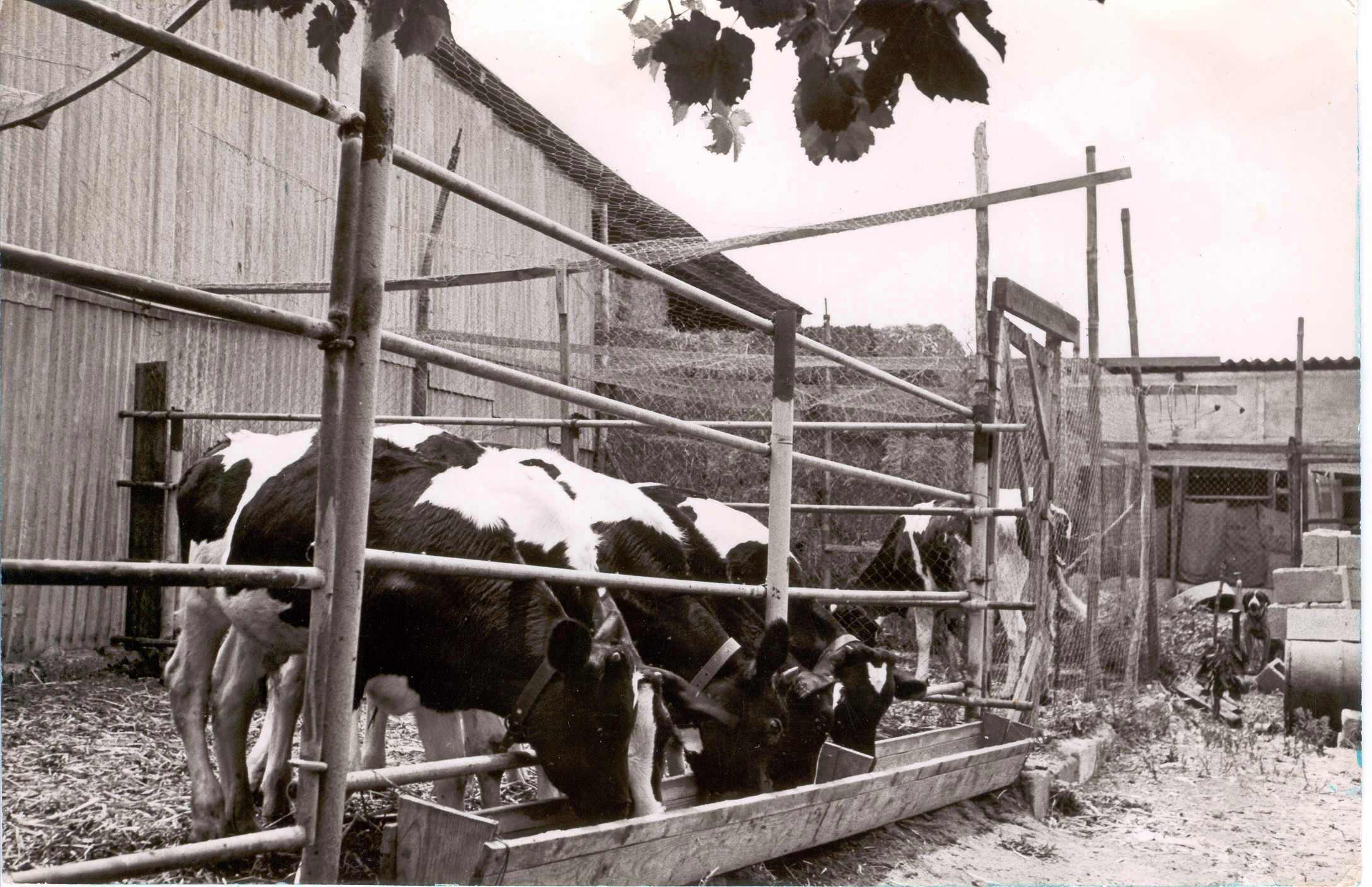 Dairy Farming in Israel Sde-warburg Dairy Farm.jpg
