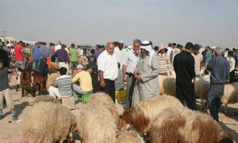שוק הכבשים ברהט