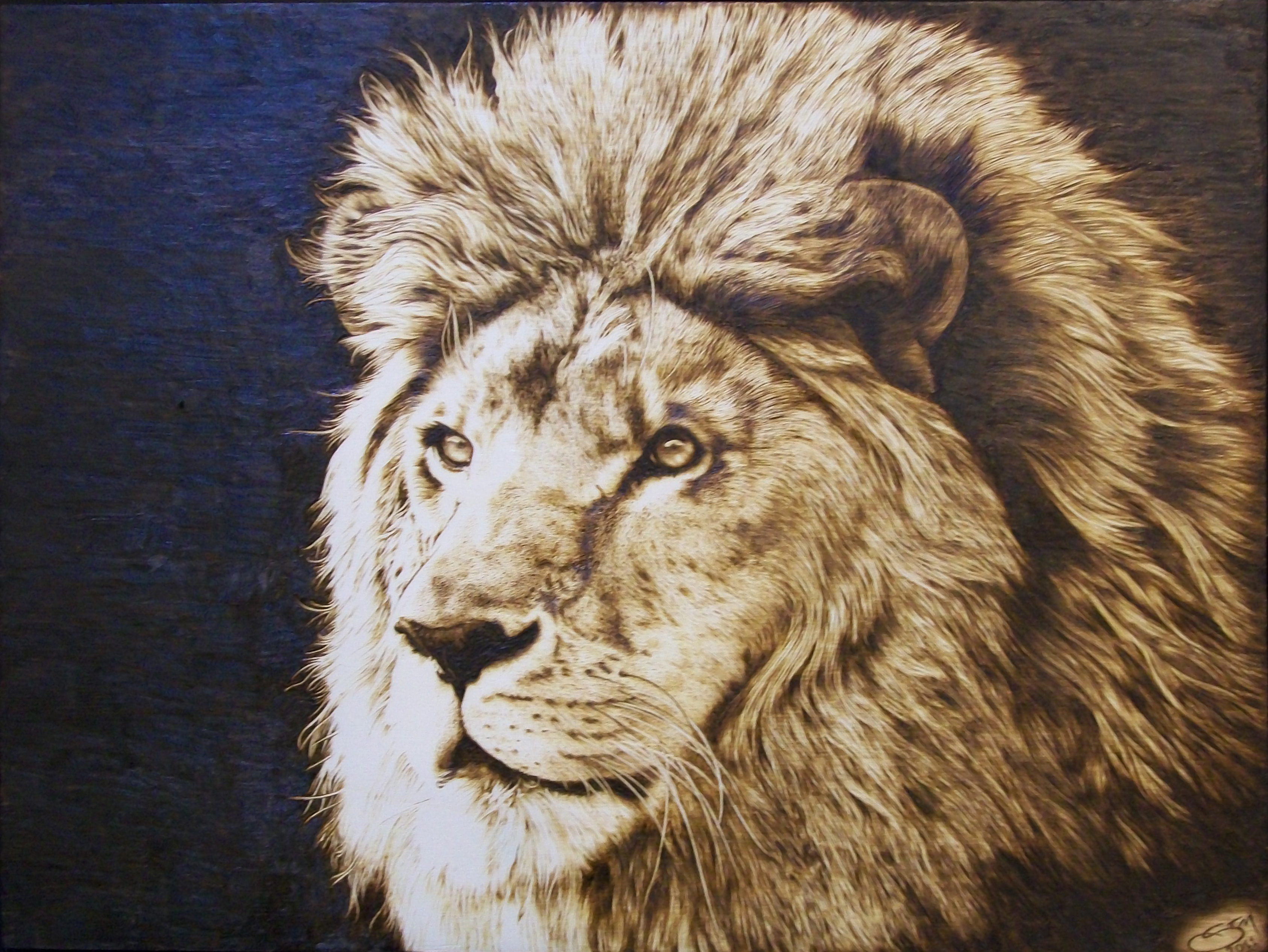 File Pyrography Thelion Jpg Wikimedia Commons