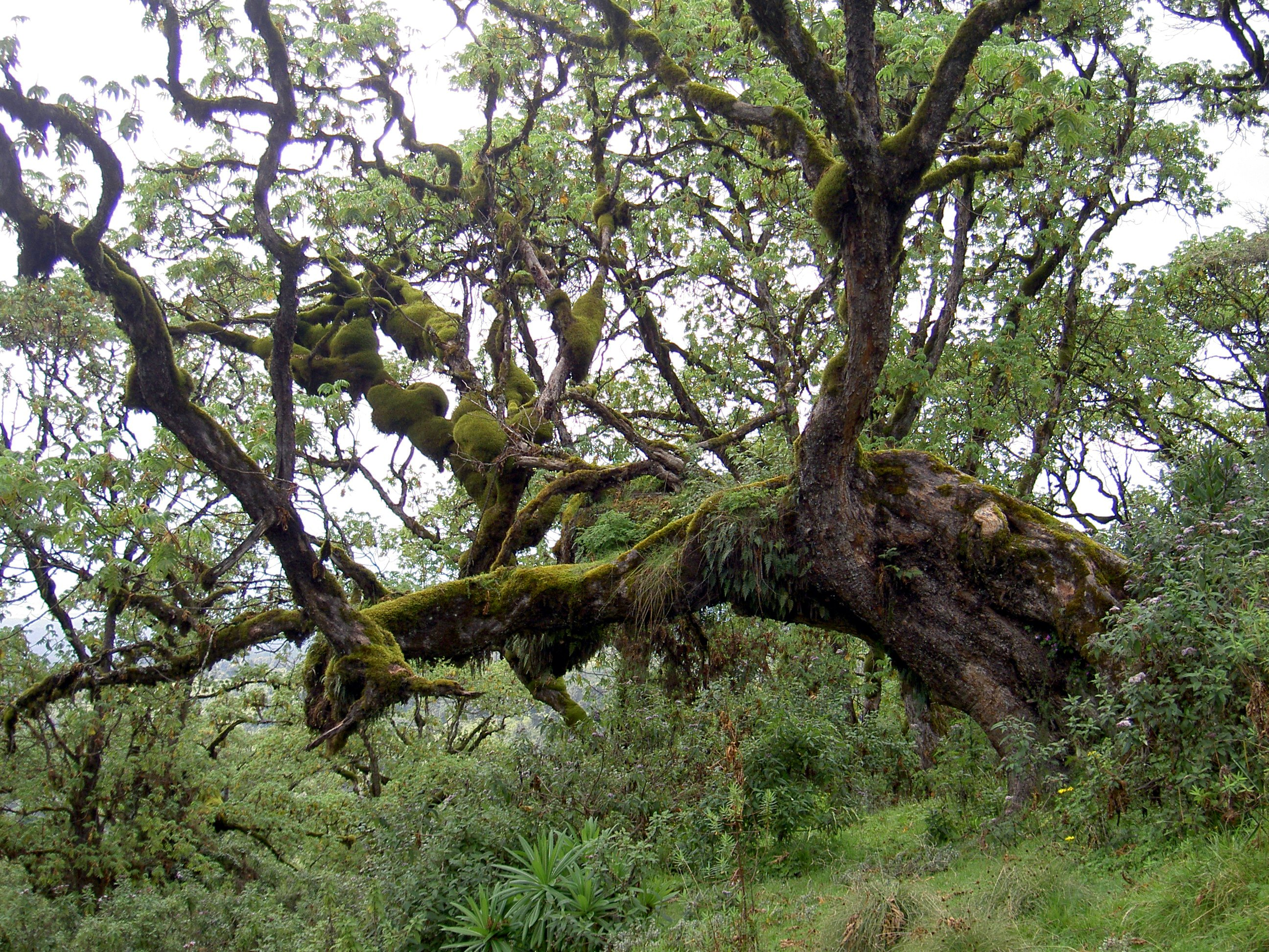 Section of Rainforest in Kenya (in Wikimedia Commons)
