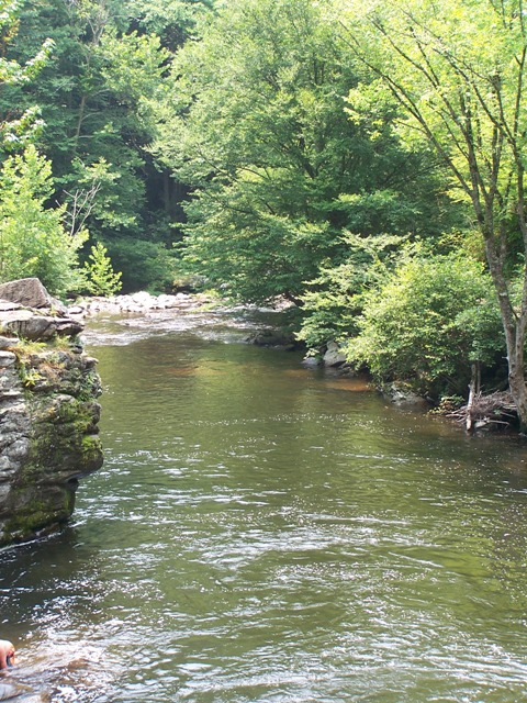 File river near gatlinburg tn jpg wikimedia commons for Fishing in gatlinburg tn