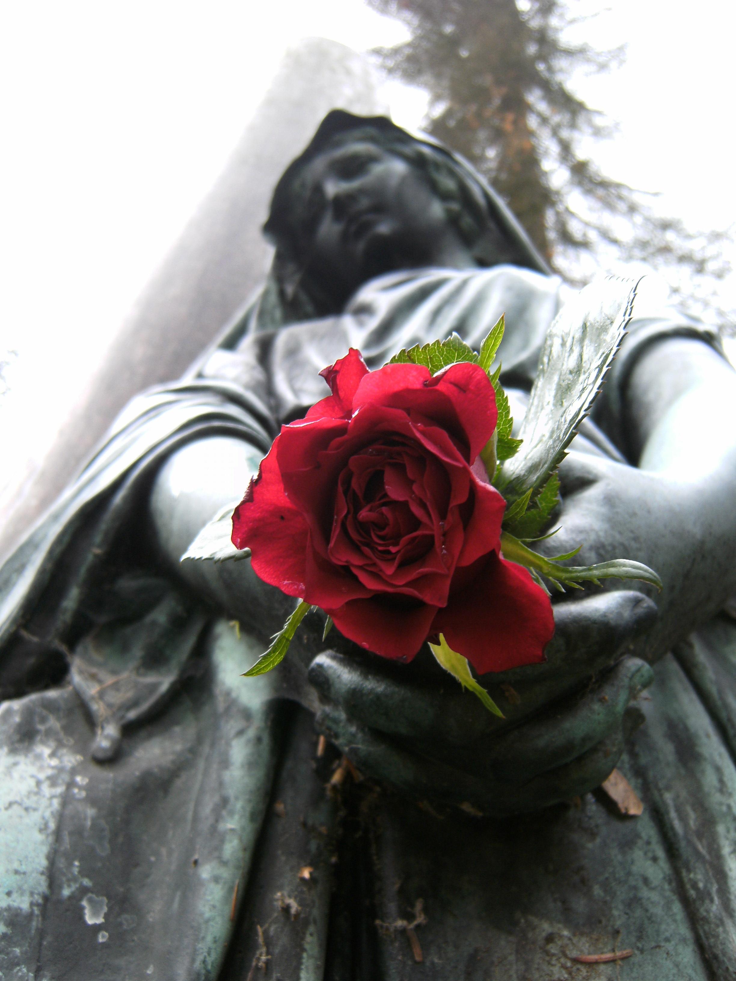 File:Rote Rose und Engel - panoramio.jpg - Wikimedia Commons