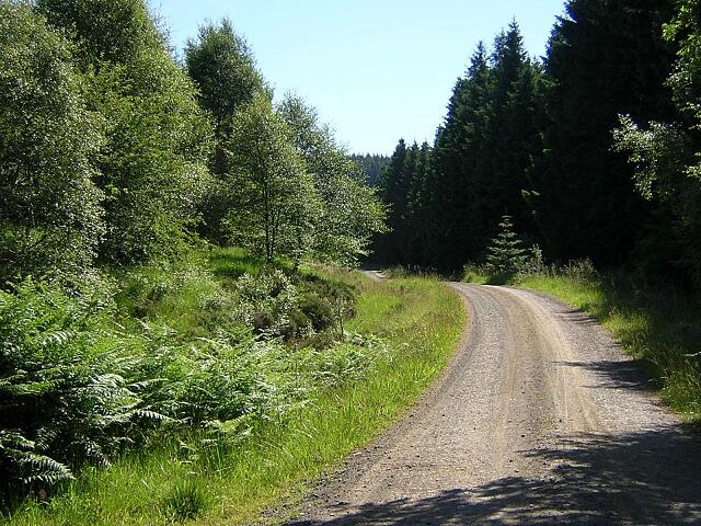 Track in Kielder Forest - geograph.org.uk - 204456
