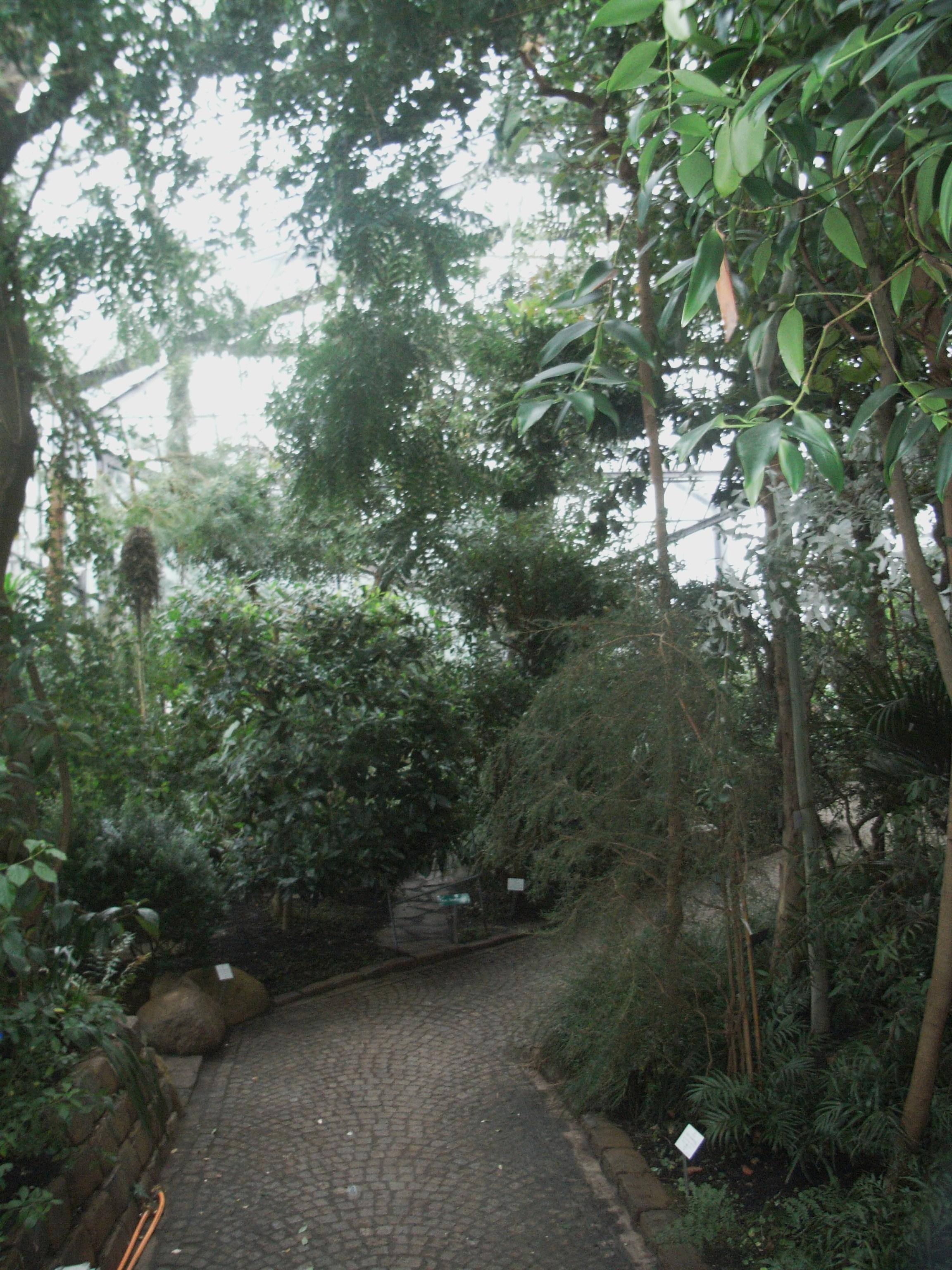 Datei Alter Botanischer Garten Hamburg Gewachshaus Jpg Wikipedia