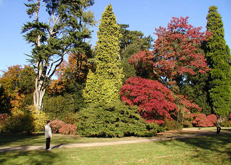 Arboretum wikipedia for Garden trees england