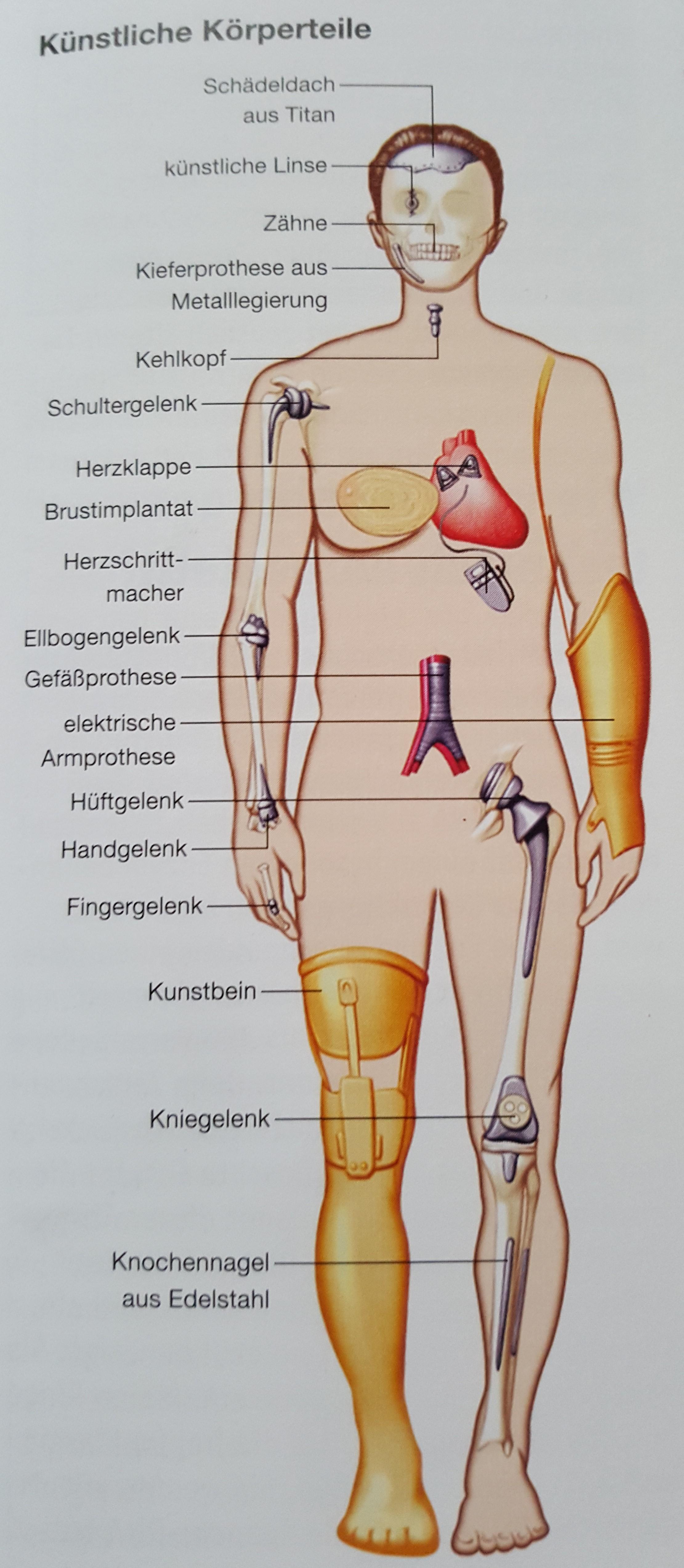 Ausgezeichnet Anatomie Körperteile Fotos - Menschliche Anatomie ...