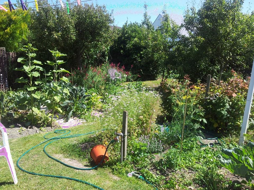 Landscape ideas for backyard joy studio design gallery for Landscaping chch