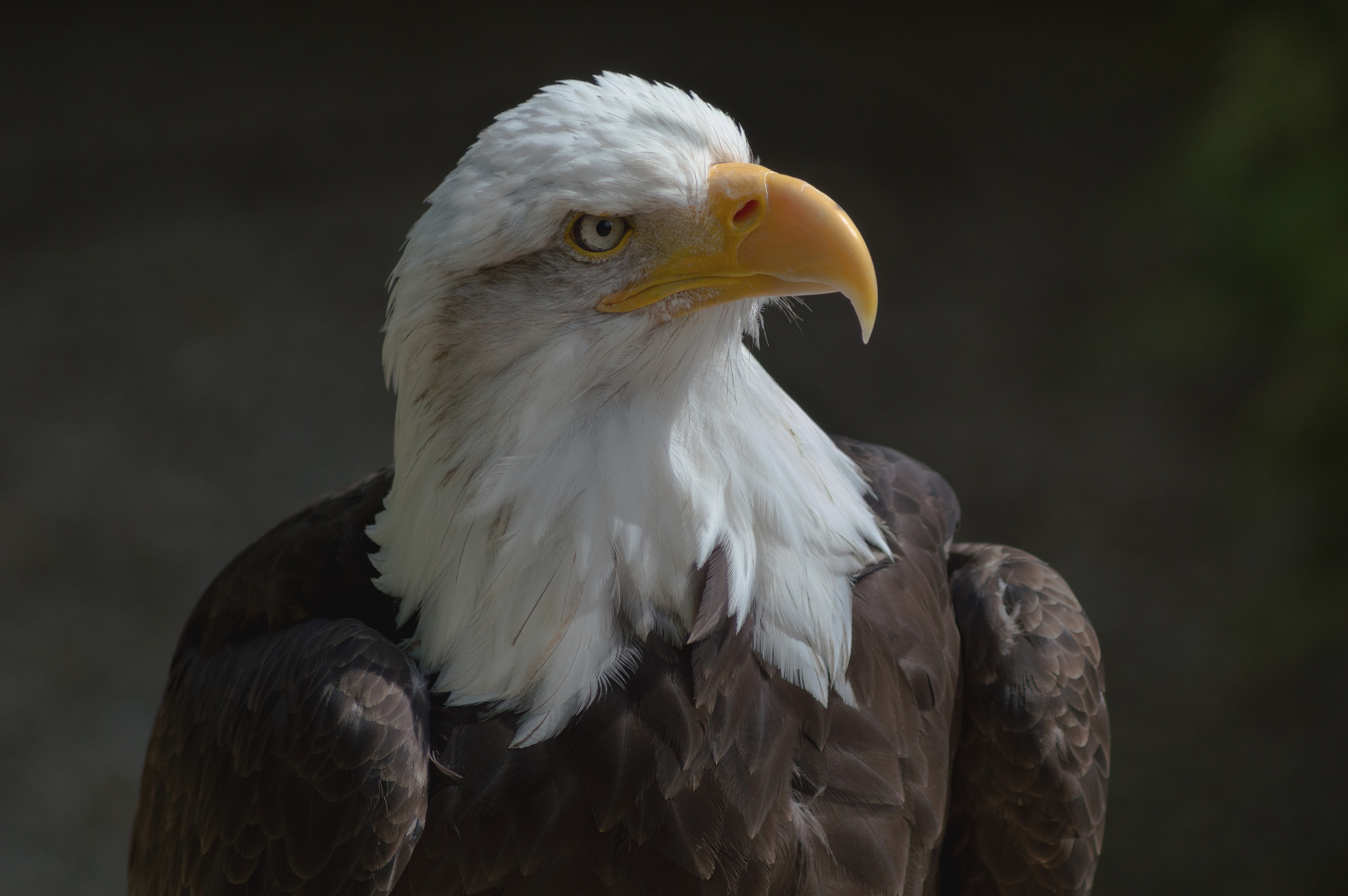 Eagle 7 1 license file | The New EAGLE 7 7 Out Now!  2019-04-01