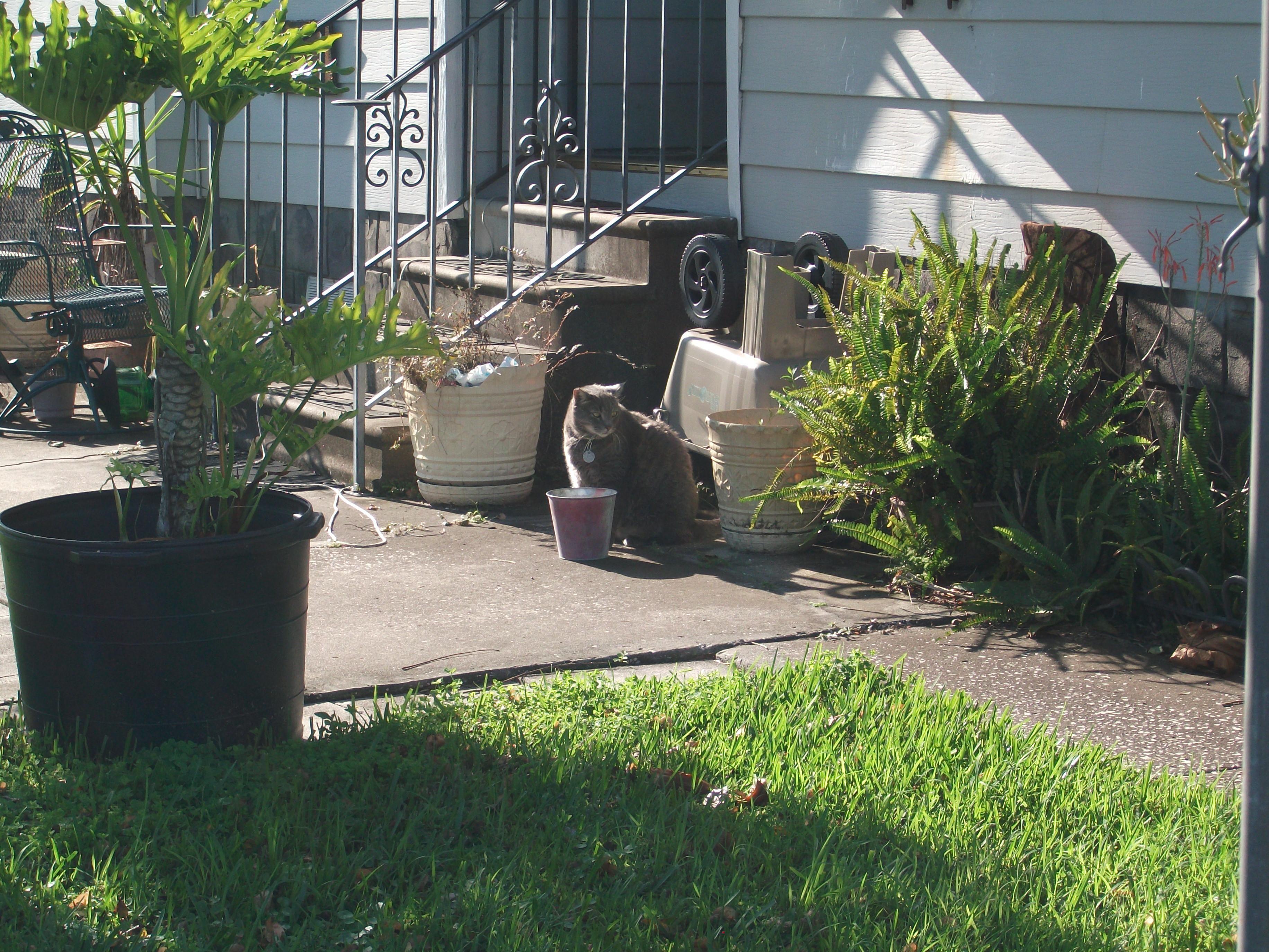 Cat In Backyard file:cat in backyard - wikimedia commons