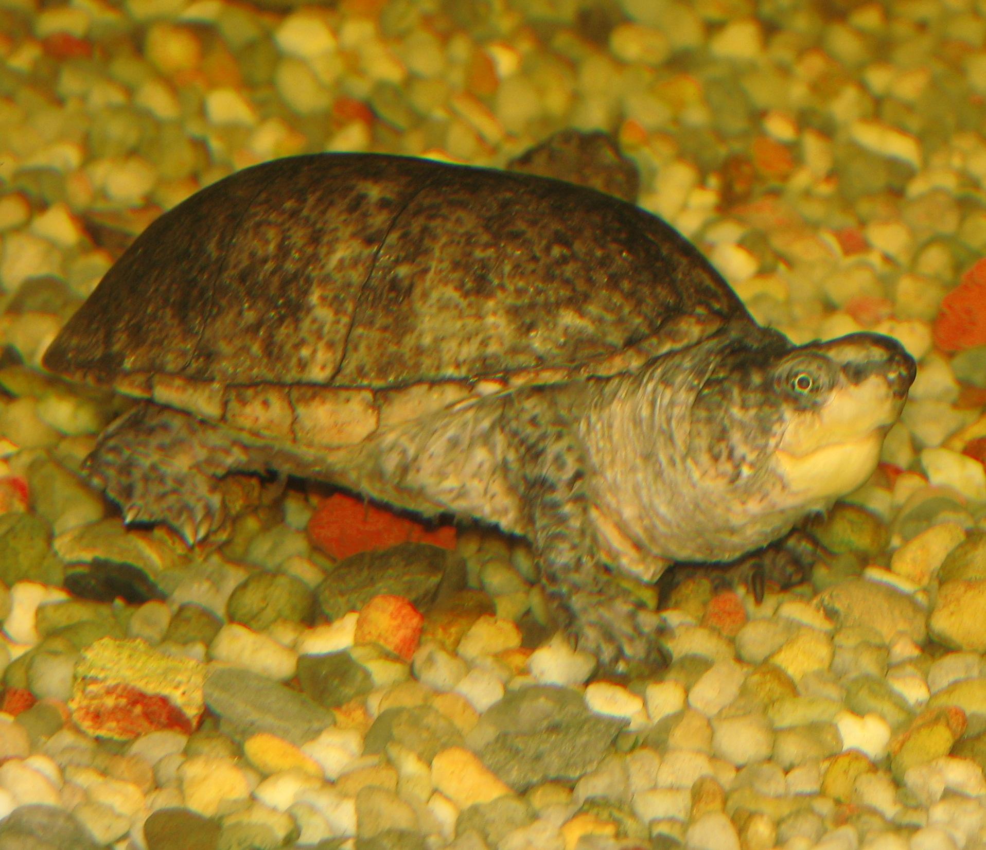 Image Result For Turtle Aquarium