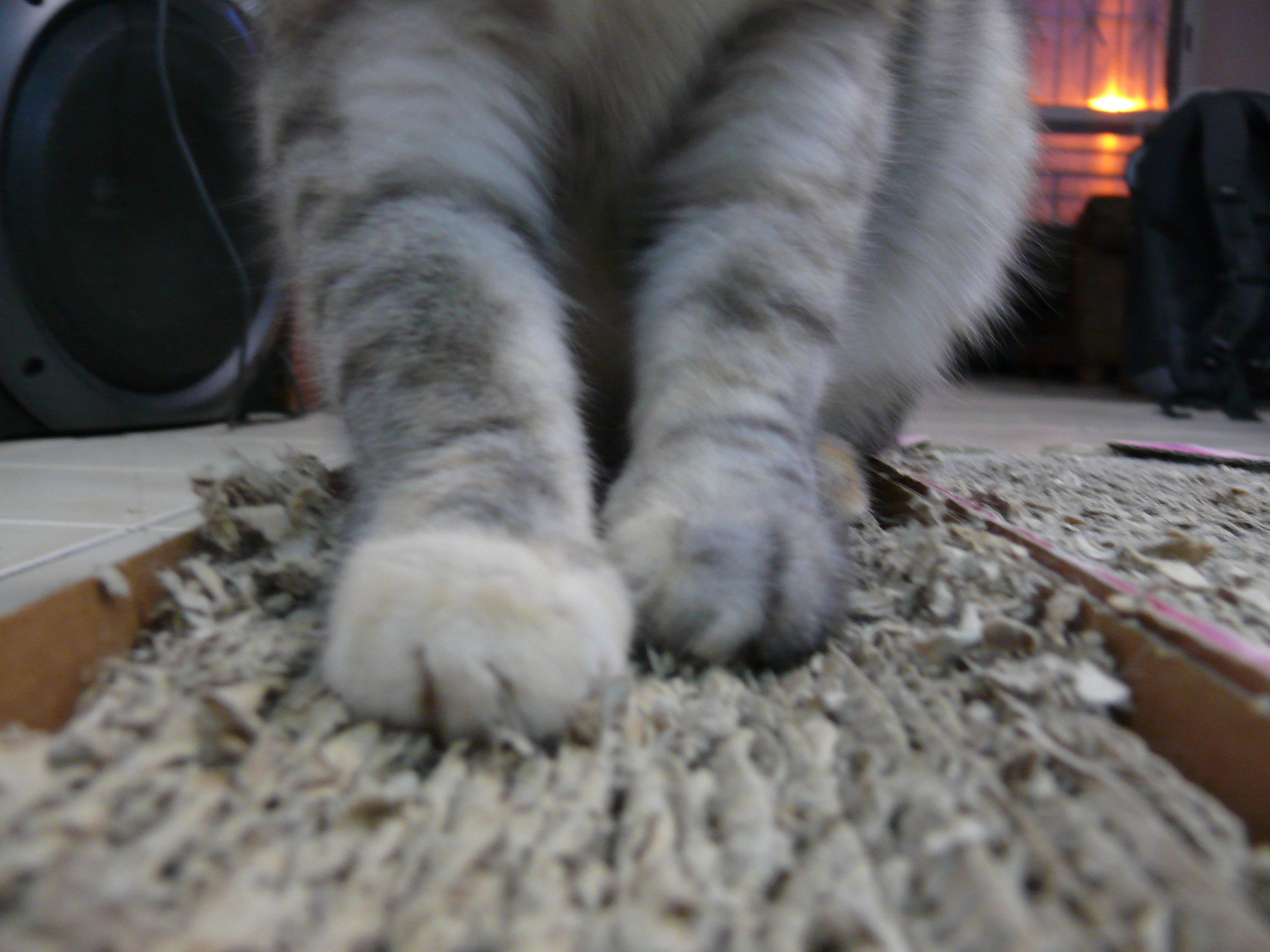 http://upload.wikimedia.org/wikipedia/commons/7/76/Corrugated_fiberboard_scratch_pad_with_cat.jpg