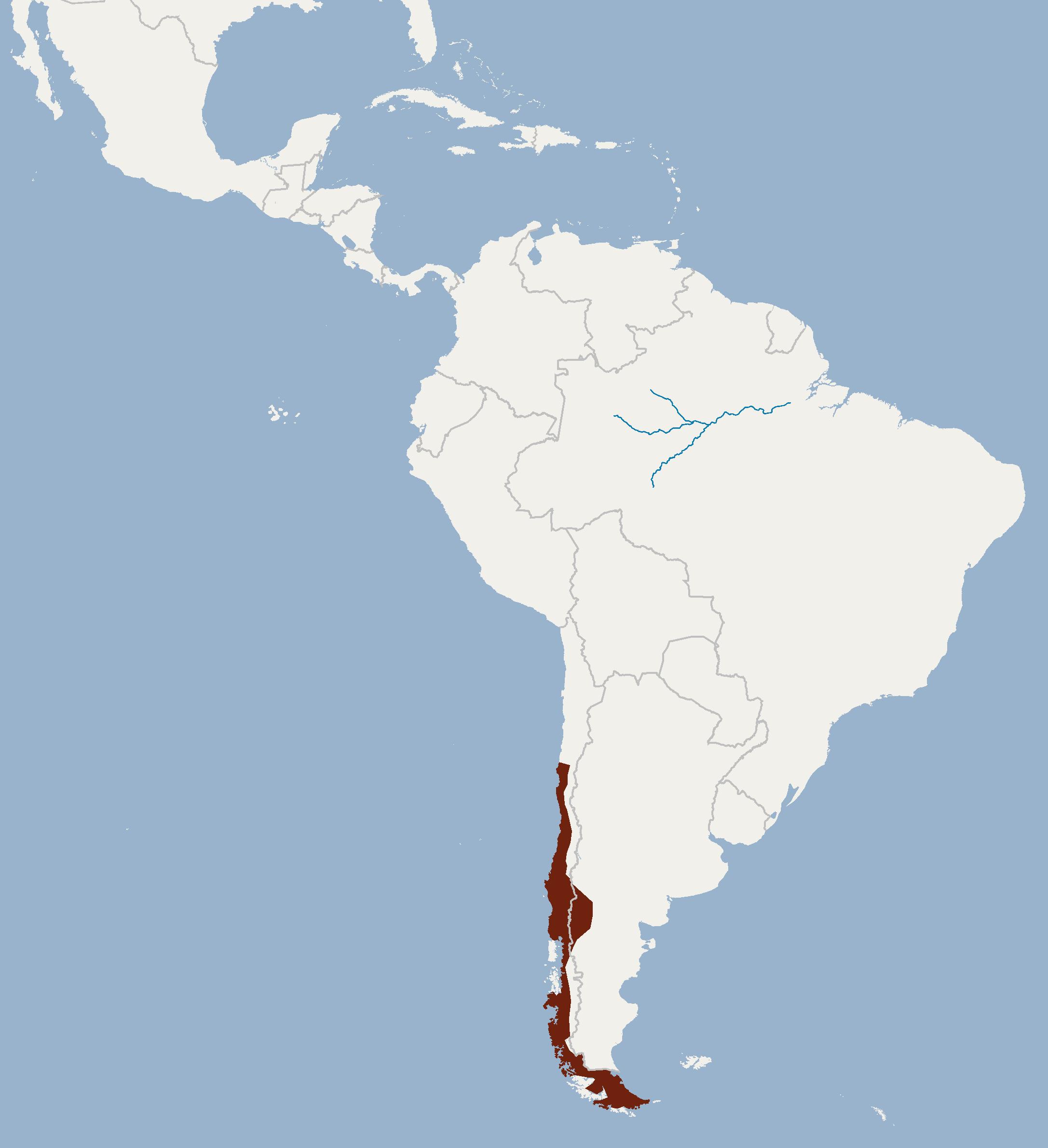 Chilenisches Mausohr – Wikipedia