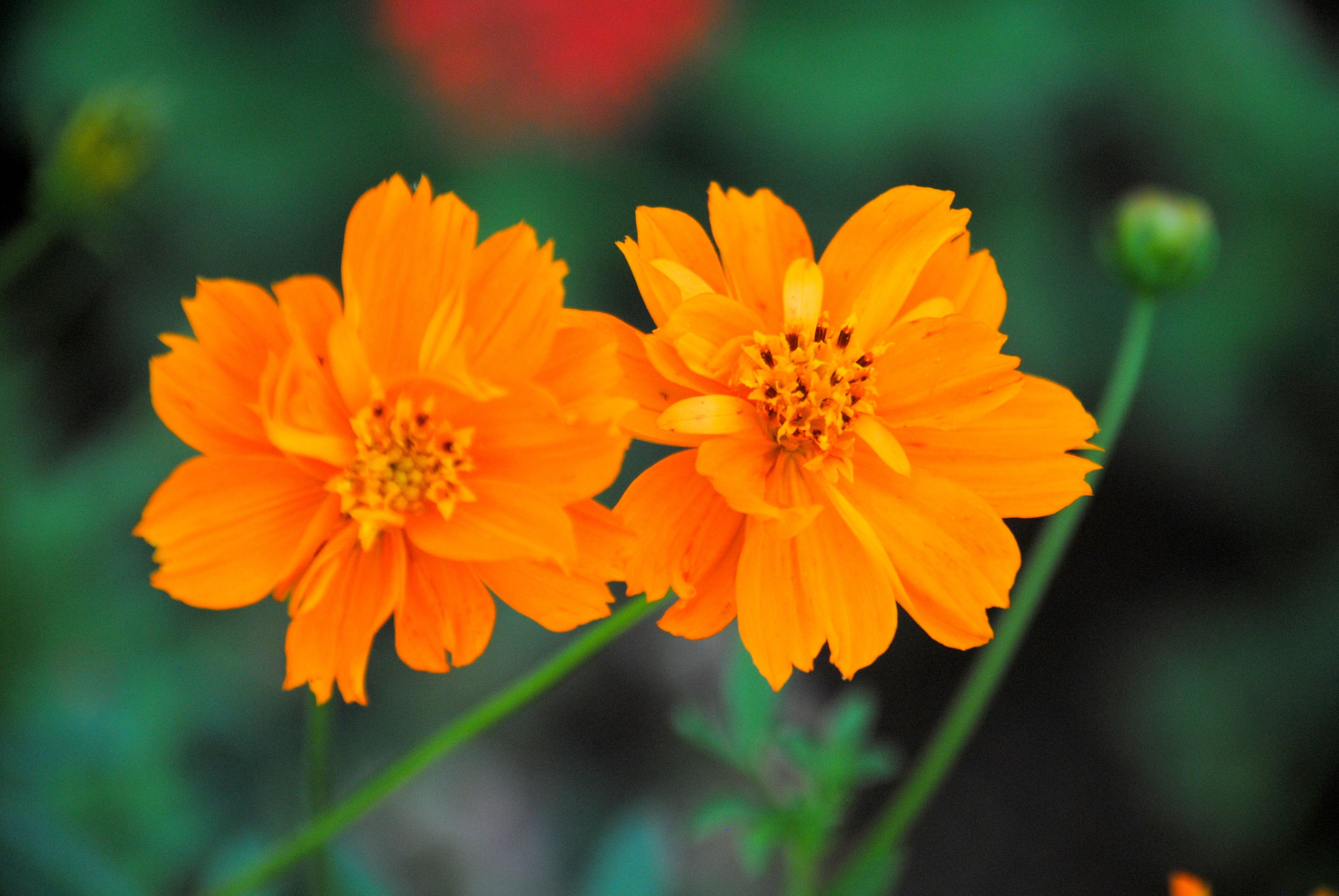 Description Flower Cos...