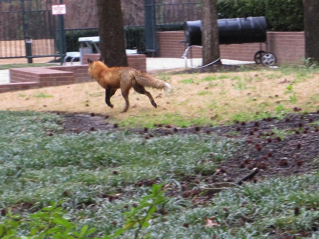 File:Fox Memphis TN 20...