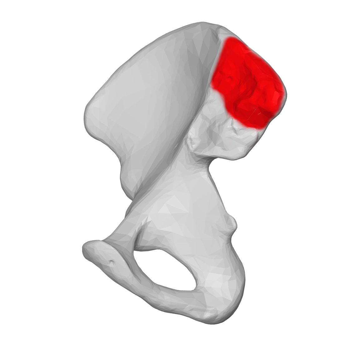 File:Iliac tuberosity 04 medial view (Right hip bone).png ...