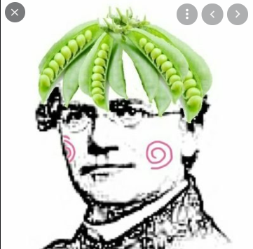 Gregor Mendel laid the foundations of genetics from his studies of plants.
