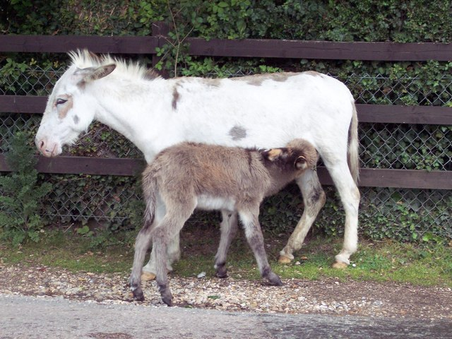 Milk Bar - geograph.org.uk - 474410