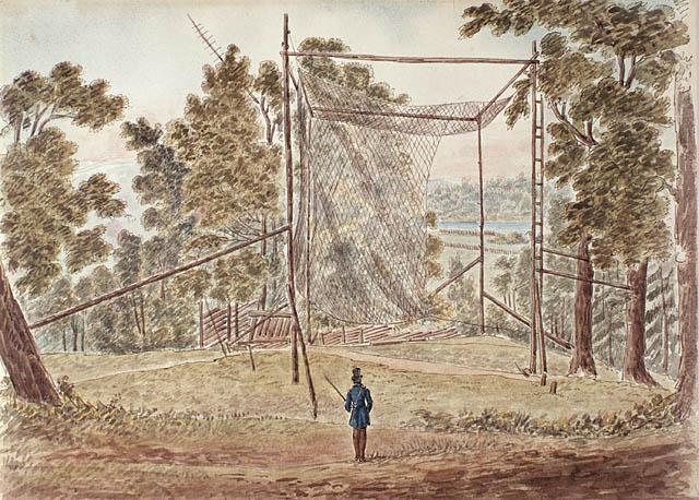 Passenger Pigeon Net Cockburn 1829