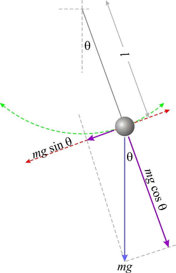 Diagrama de las fuerzas que actúan en un péndulo simple.