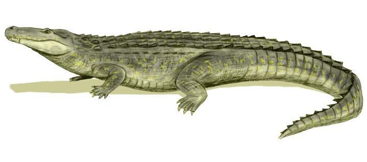 Purussaurus Size Purus...