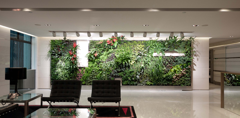 Indoor plants to liven up office space