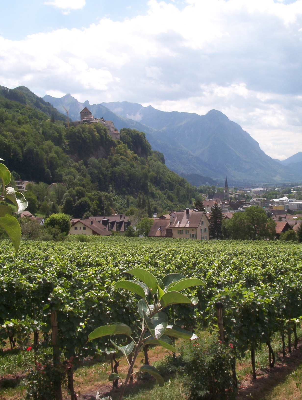 Liechtenstein vineyard