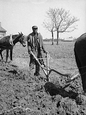 the tribulations of sharecrop farmers in the united states Sharecropping and tenant farming for kids ulysses grant was the 18th american president who served in office from march 4, 1869 to march 4, 1877 one of the important events during his presidency was the sharecropping and tenant farming system.