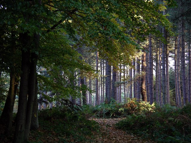 Файл:Sherwood Pines Forest Park, Notts. - geograph.org.uk - 56919.jpg