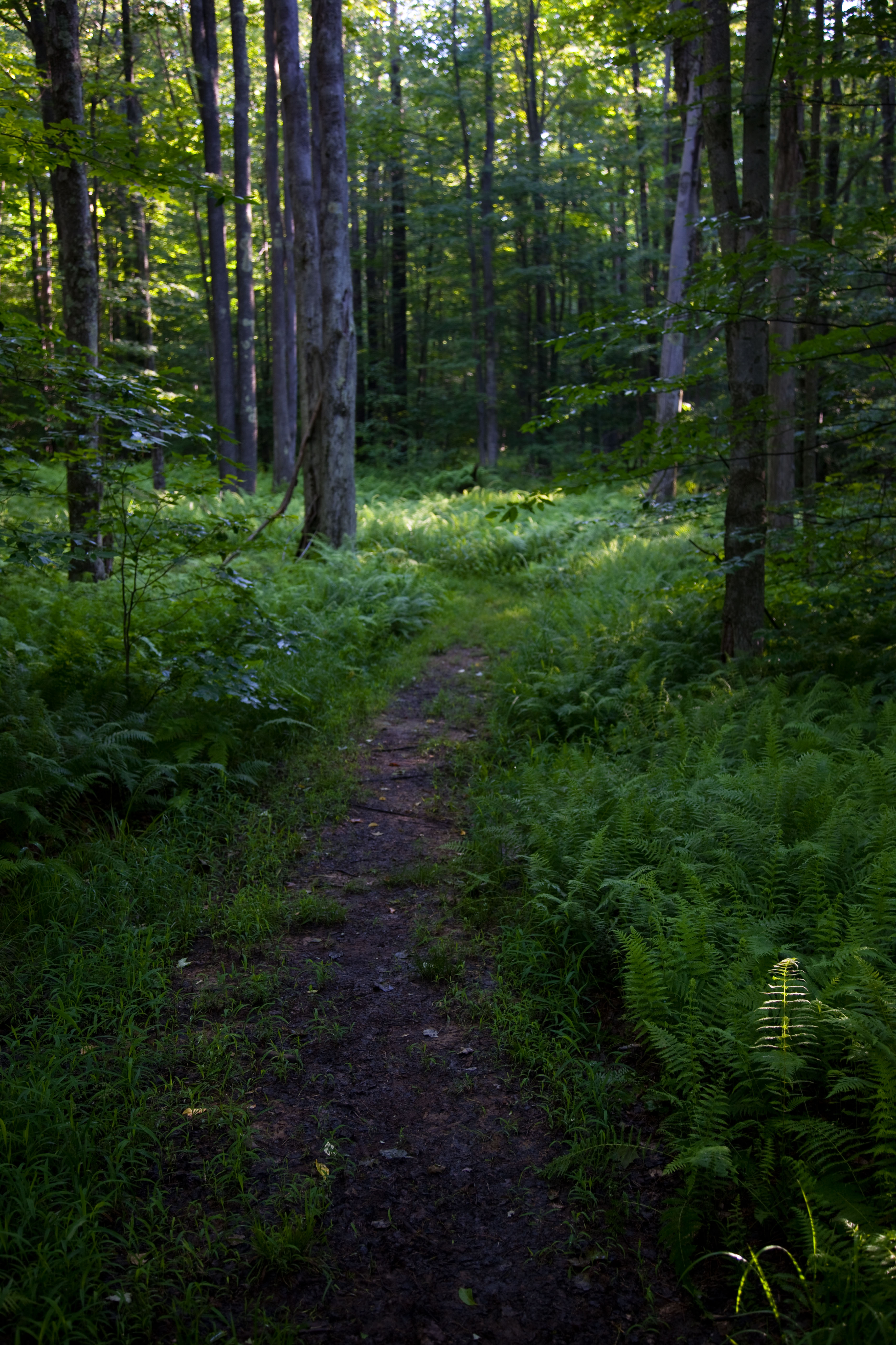 File Spring Morning Hiking Trail West Virginia Forestwander Jpg Wikimedia Commons