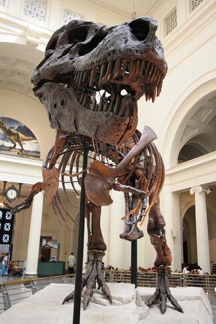 File Sue Dinosaur Jpg Simple English Wikipedia The