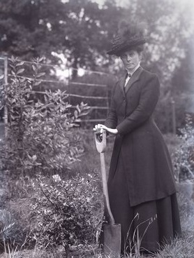Alice Perkins planting at Eagle House in 1910