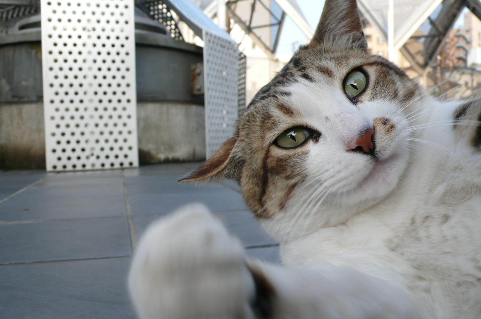 Картинки привет коты, своими