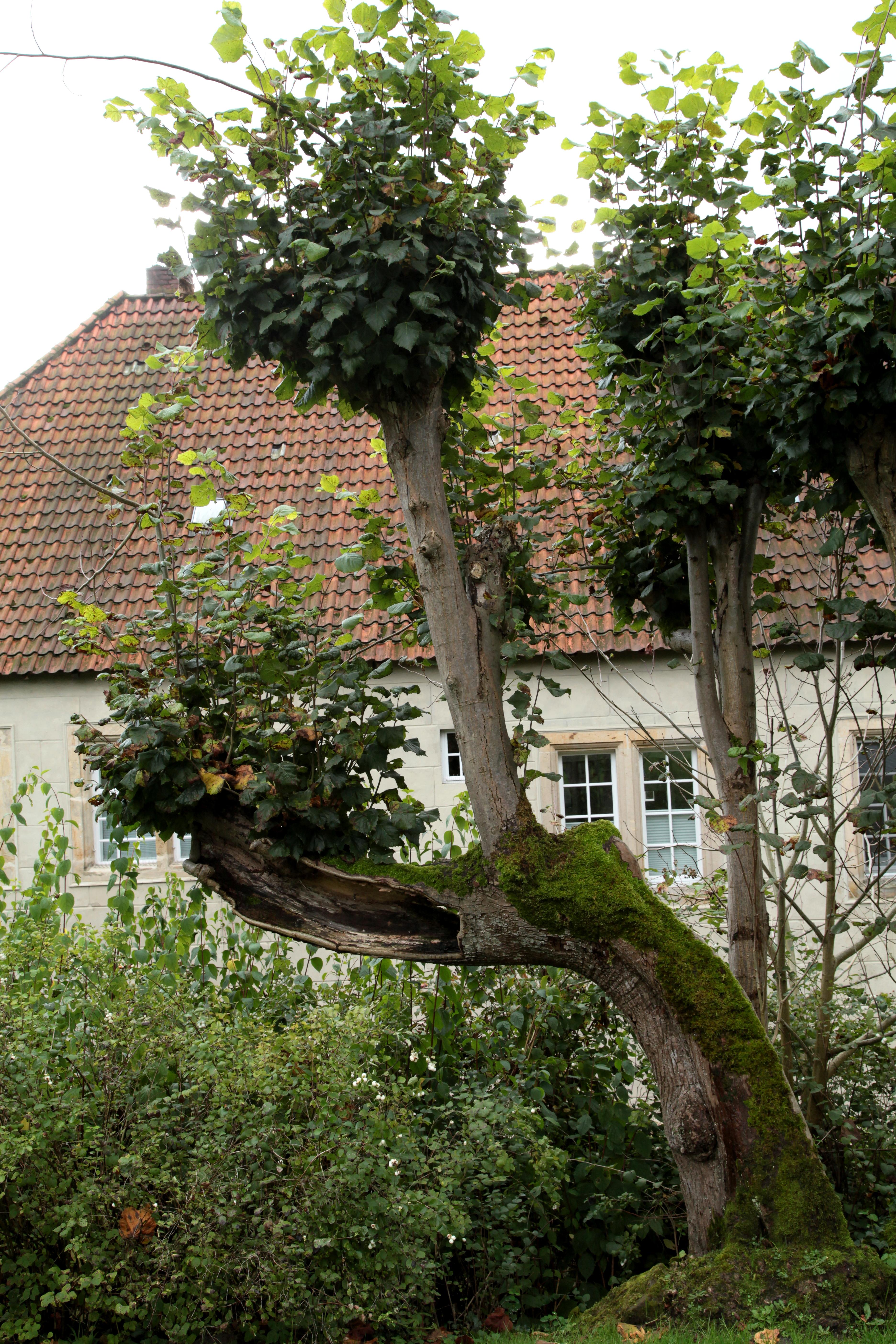Nice File:Tecklenburg   Haus Marck   Lindenallee 07 Ies