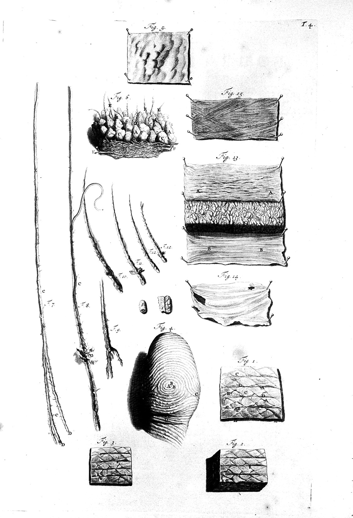 Filethe Anatomy Of Humane Bodies Skin And Hair Follicles Wellcome