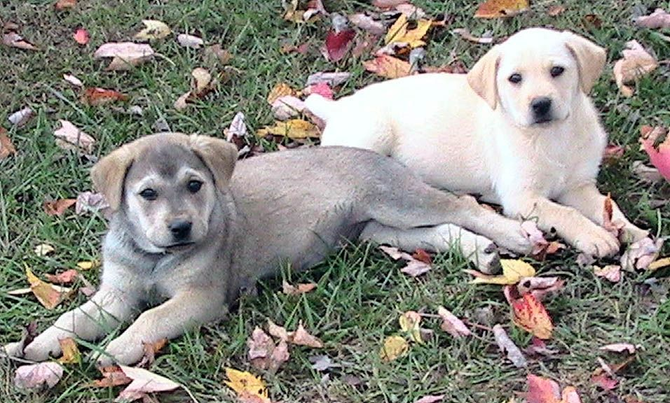 file two puppies wikimedia commons