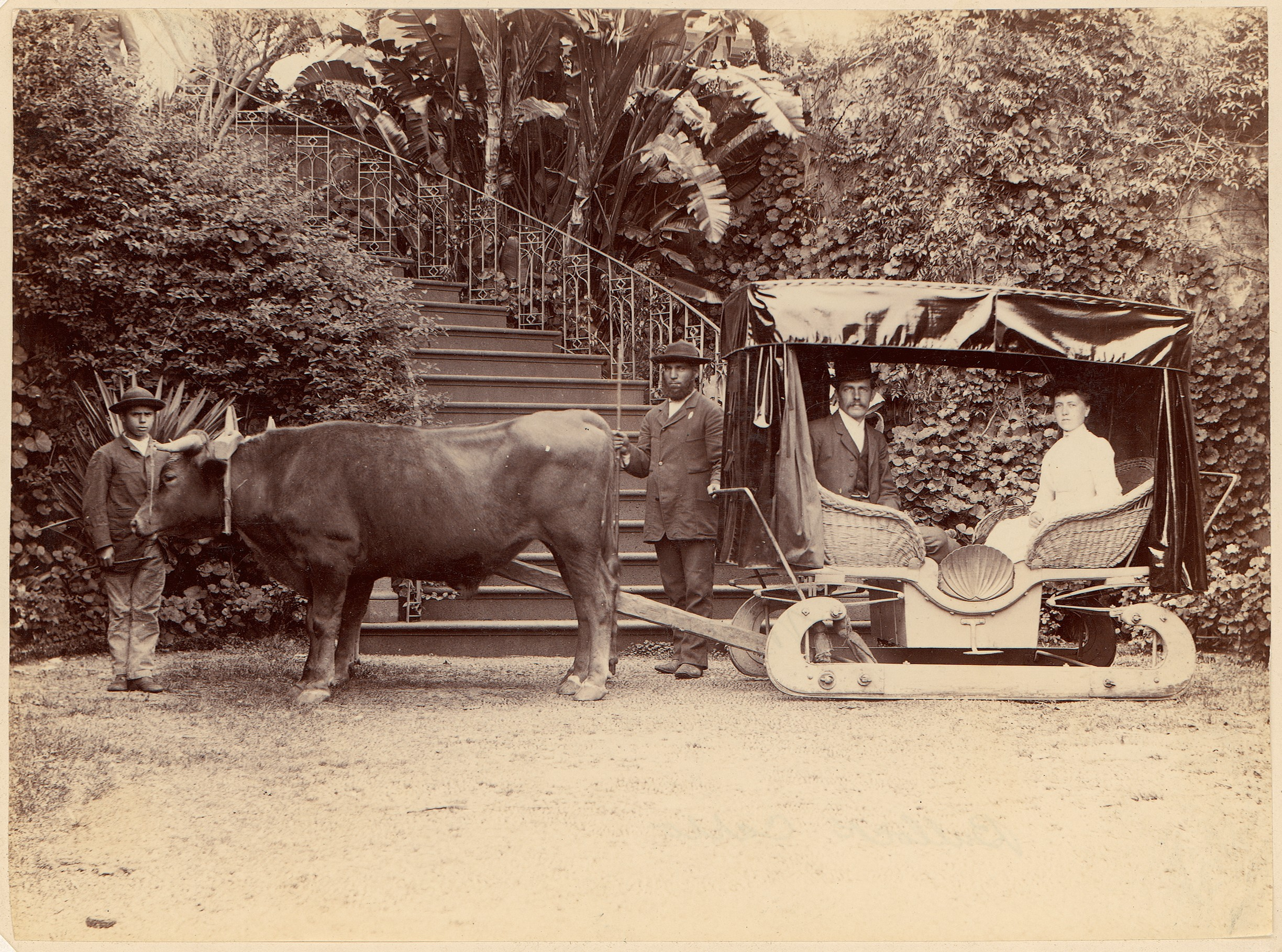 Image result for oxcarts in madeira