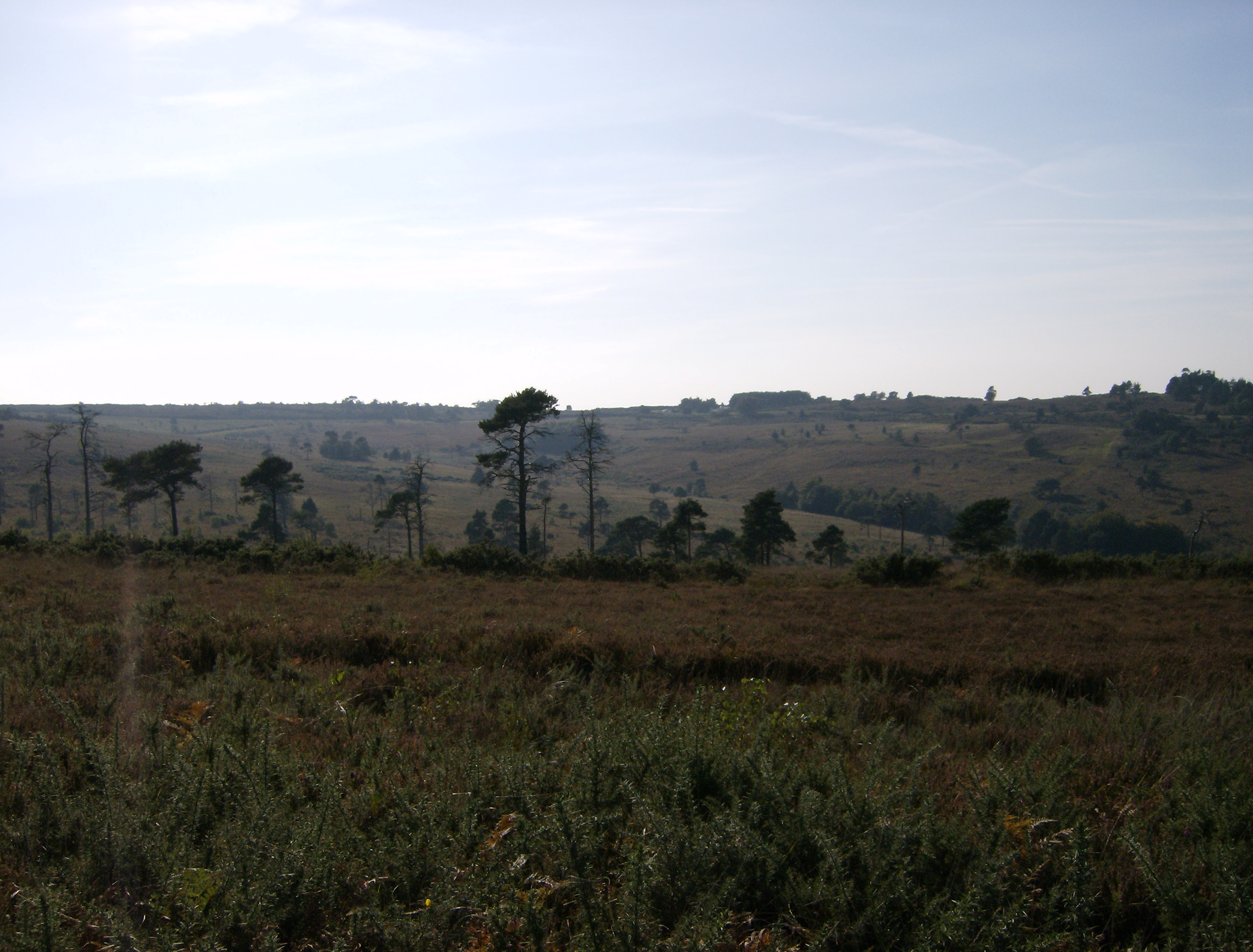 ashdown forest Introduction: at 2,500ha, ashdown forest is the largest area of open access land in the south-east its breezy, treeless heights consist of internationally-designated heathland, and the landscape has considerable evidence of human management over thousands of years.