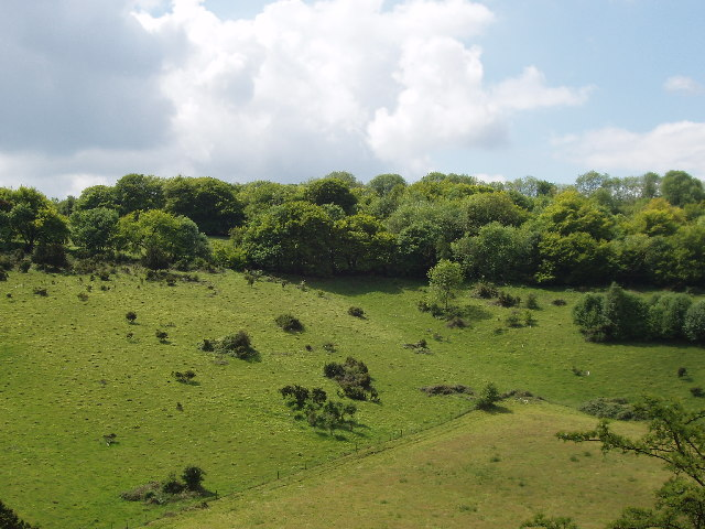 Bald Hill, Aston Rowant National Nature Reserve - geograph.org.uk - 14377