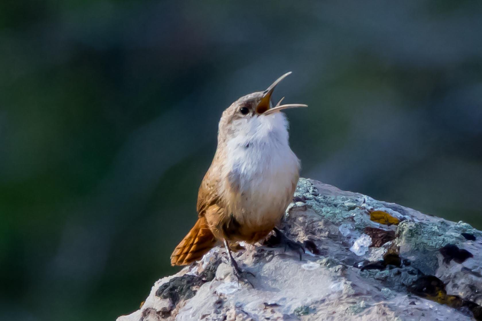 One Cool Thing: TikTok Bird Beats