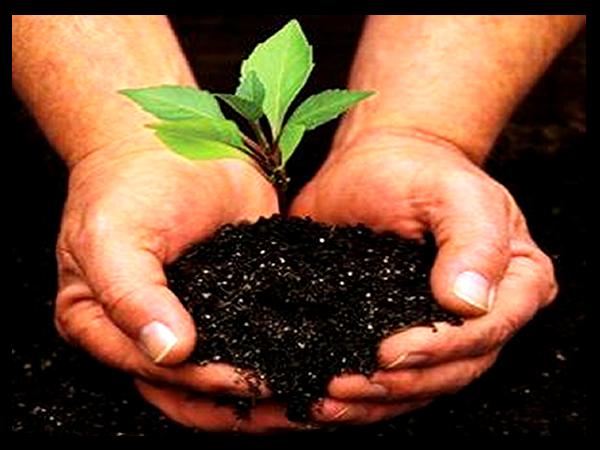 Cuidemos las plantas del medio ambiente