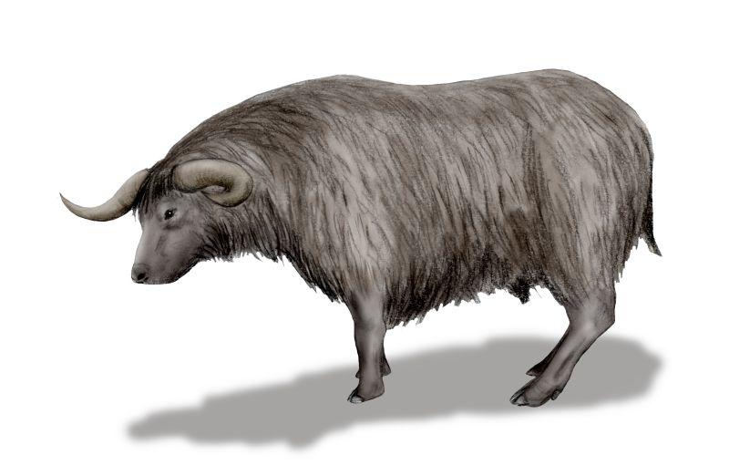 https://upload.wikimedia.org/wikipedia/commons/7/77/Euceratherium_BW.jpg