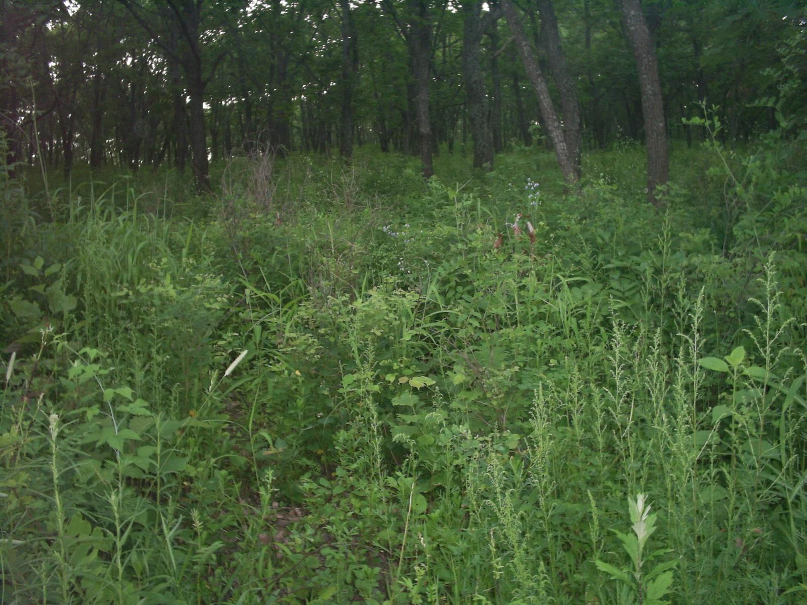 Файл:Forest Grass Primorsky Krai.jpg