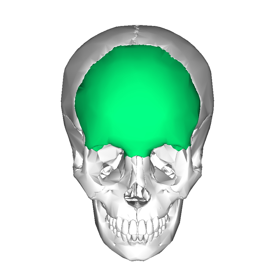 File frontal bone anterior2