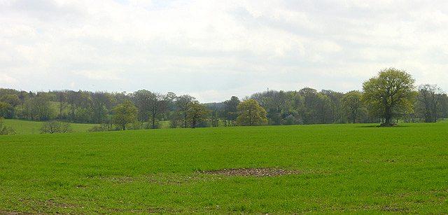 Gottridge Wood - geograph.org.uk - 6168