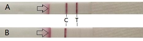 Lateral flow immunochromatographic test.jpg