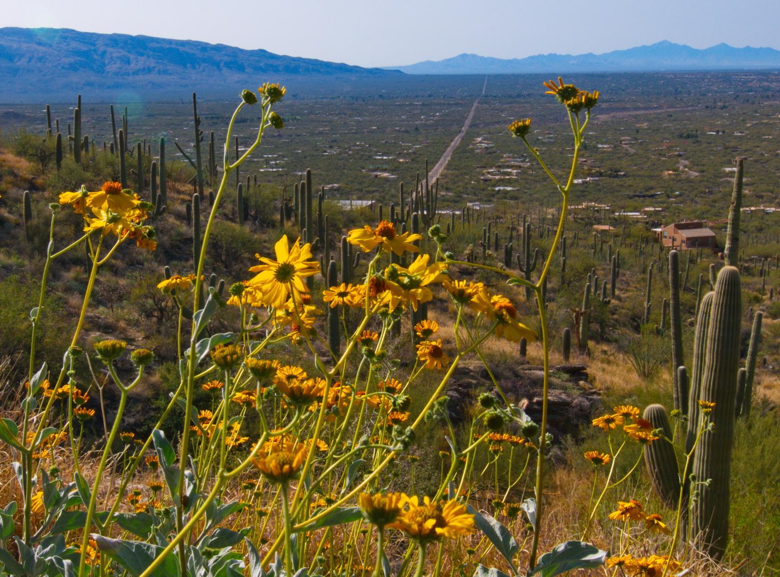 Catalina Highway, Arizona에 대한 이미지 검색결과