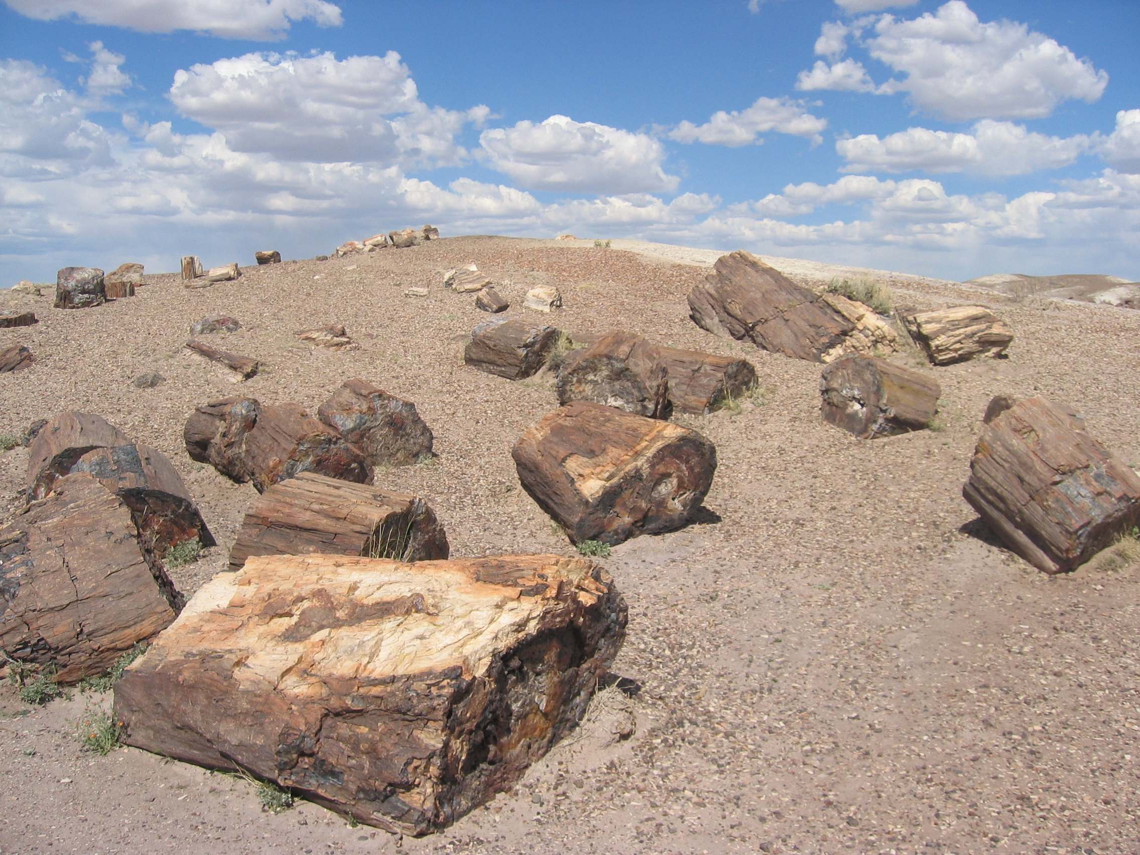 petrified forest natl pk dating site Book your tickets online for painted desert, petrified forest national park: see 2,237 reviews, articles, and 2,050 photos of painted desert, ranked no2 on tripadvisor among 17 attractions in petrified forest national park.