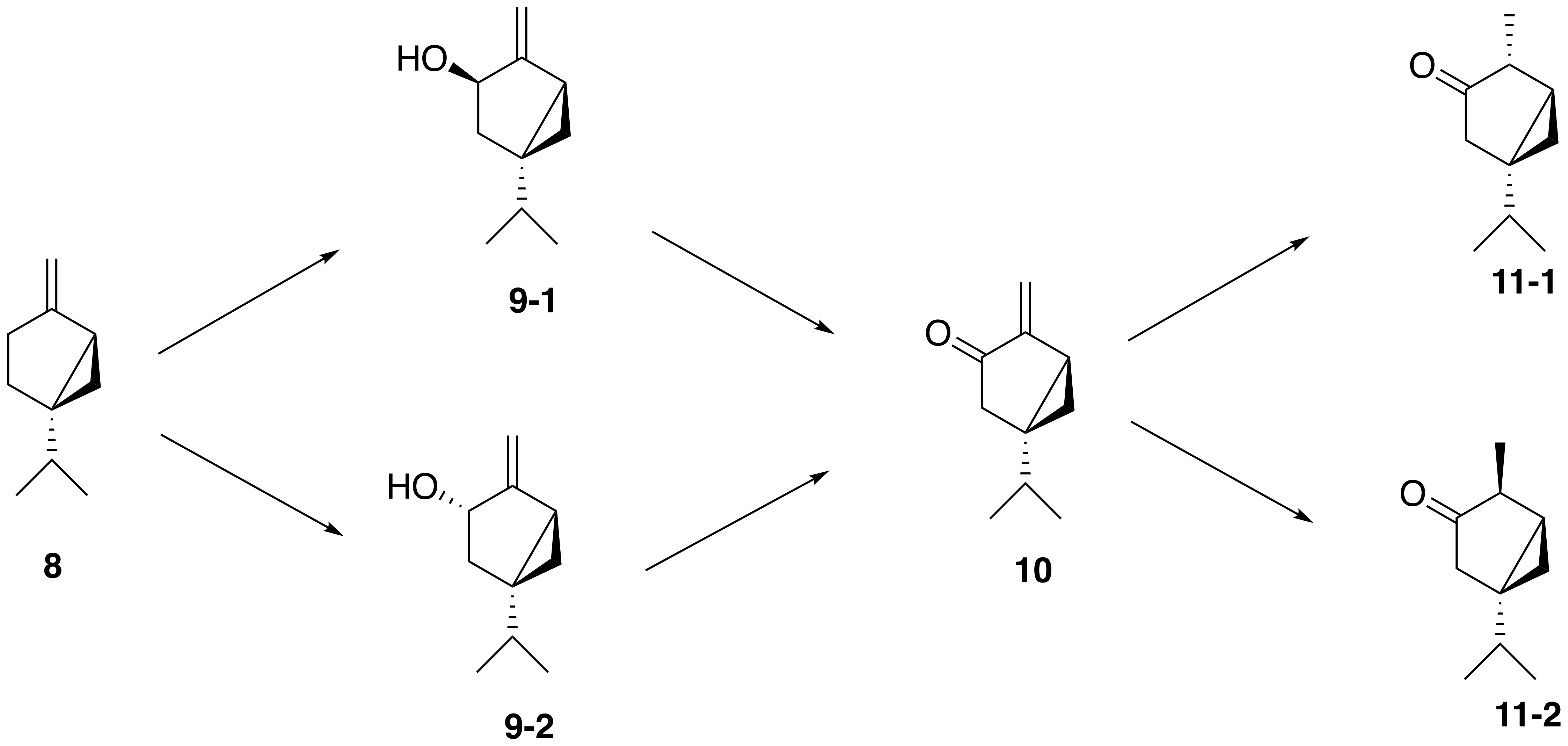 Proposed synthesis of thujone from sabinene
