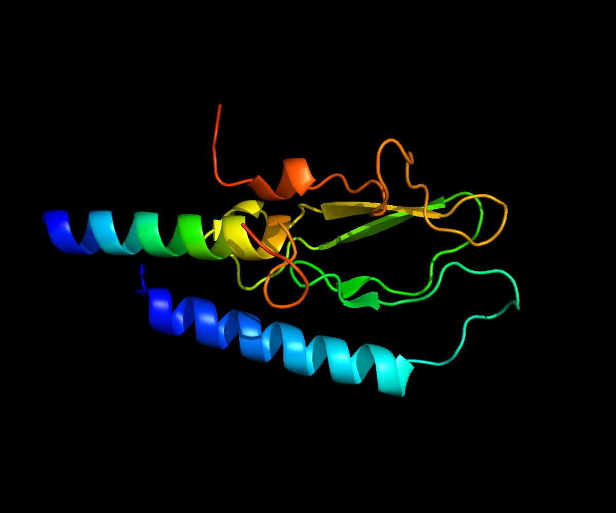 Image result for Glucagon Like Peptide-1 (GLP-1) Agonists